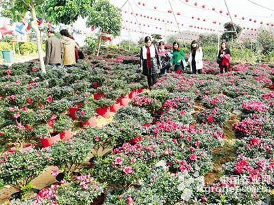 53万亩的苗木花卉生产基地,年产值超1亿元.