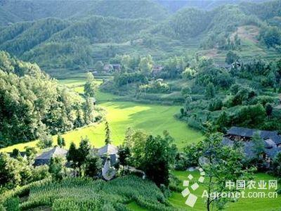 温岭绿色通道风景图