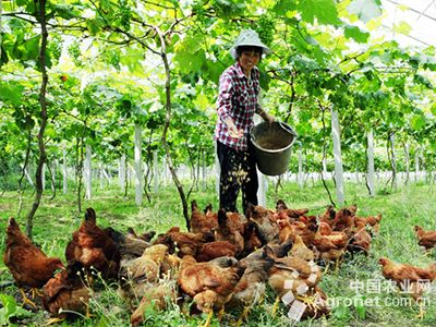 冯应红创办的云里莲海小龙虾立体养殖基地就投资500多万元,占地150多
