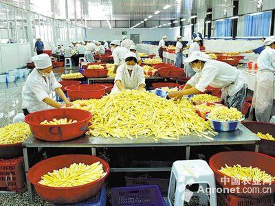 食品研发部组织结构