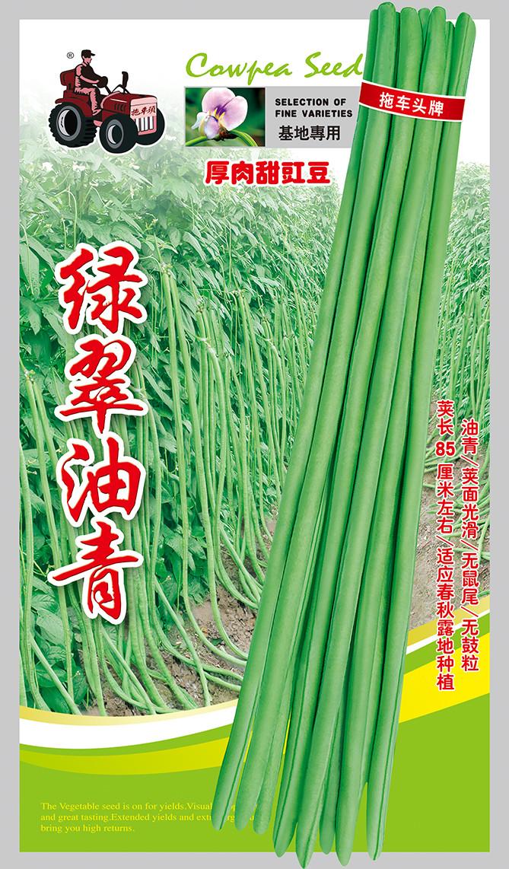 绿翠油青——油青豆型系列豇豆