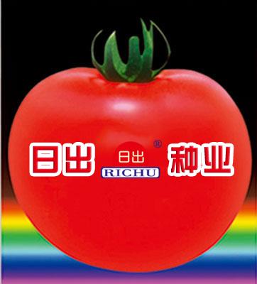 日出红冠—番茄种子