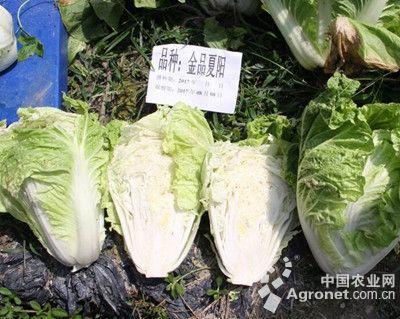 轻粘蔬菜制作步骤图