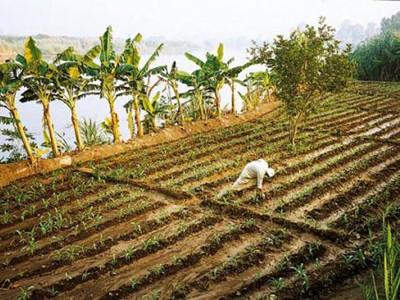 神权之下的农业国度_古代埃及的灌溉农业