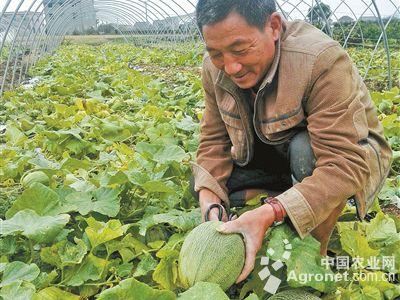老项今年56岁,是浙江宁波象山大理村人.