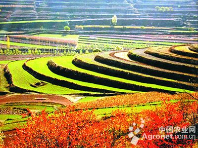 宁夏农村家乡照片