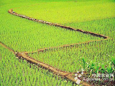 武汉推进农业供给侧结构性改革(图)