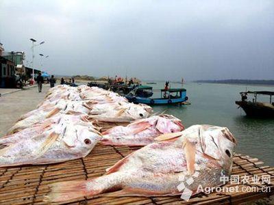 海口海洋渔业局宣讲十九大精神(图)
