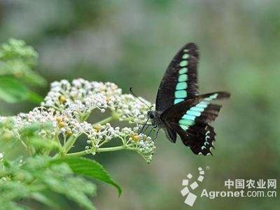 上海动物园蝴蝶展盛大开幕(图)