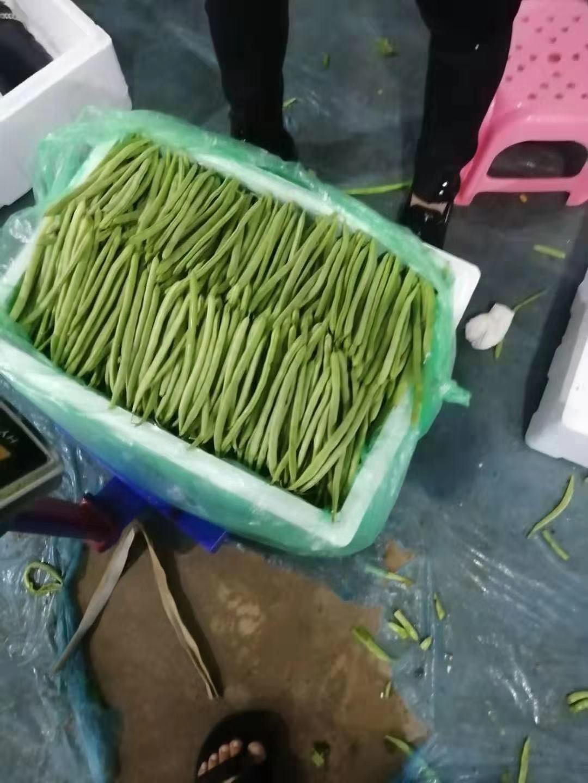 精品四季豆