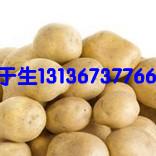 馬鈐薯種子,玉米