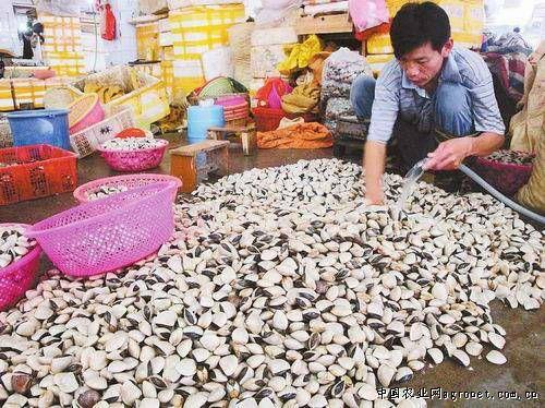 目前,在淡村海鲜批发交易市场,明虾零售每公斤卖36至40元.