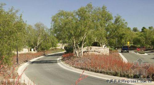 背阴峡谷住宅小区绿化