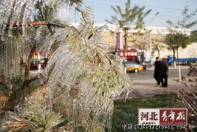 """长安区园林局工程科一位王姓工作人员介绍,树木过冬需要通过""""浇"""
