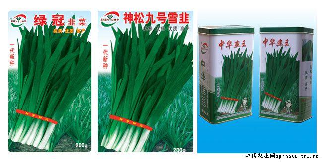 韭菜叶片保护组织结构图