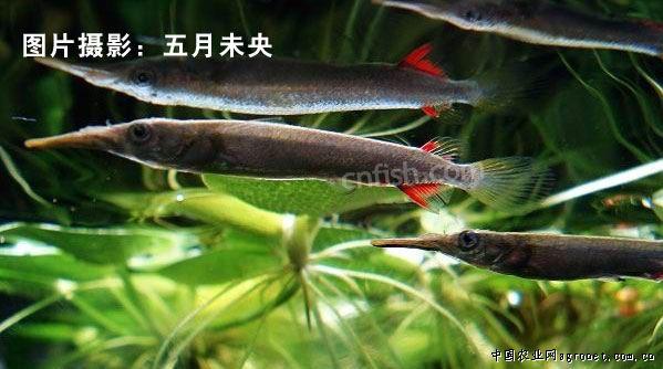 壁纸 动物 昆虫 鱼 鱼类 桌面 599_334