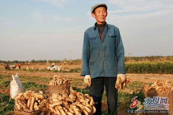 特别是在蔬菜保险,果树保险等生产