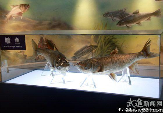 江苏武进进一步推动鱼类繁殖及产品深加工技术的进步
