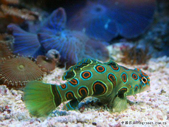 壁纸 动物 海底 海底世界 海洋馆 水族馆 鱼 鱼类 550_413