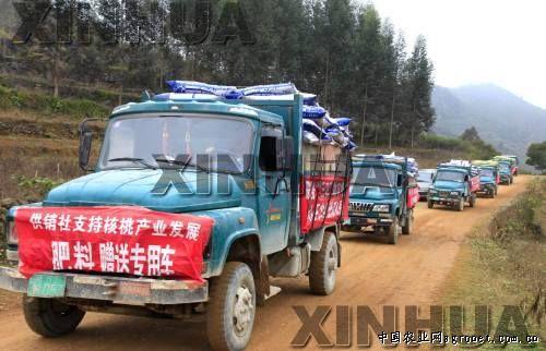 1月23日,运送化肥的农用车行驶在通往广西凤山县平乐瑶族乡大洞村的