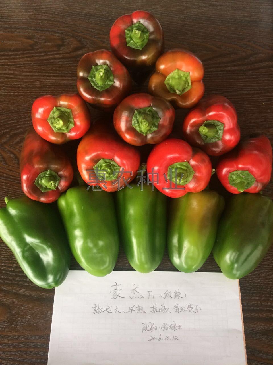 豪杰—甜椒种子