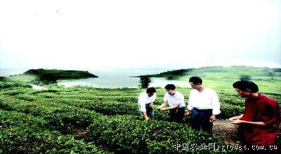 湖南华容两家茶场负责人交流技术帮扶茶乡(图)