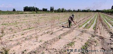 新疆乌鲁木齐市:挖深井解决和平