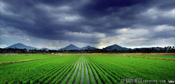 全球变暖对农业的影响