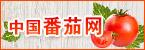 中国番茄网