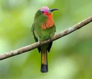 你没见过的20种最美丽的鸟