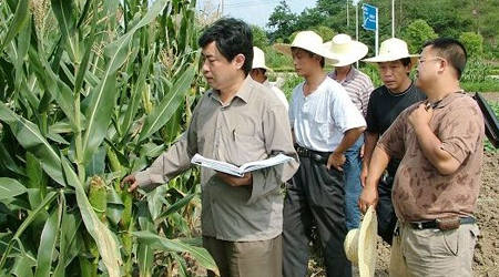 """合肥:培养农产品育种行业""""领头雁"""""""