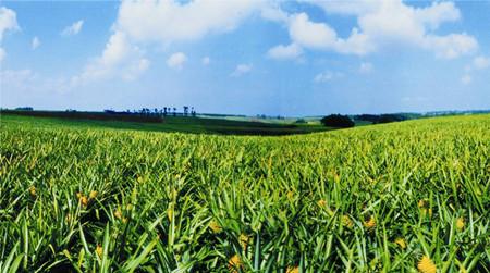 农业品牌建设最需要杂交思维