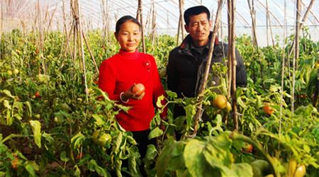 最新最赚钱的10大农业投资机会一定要把握