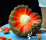 盘点世界上的奇葩水果