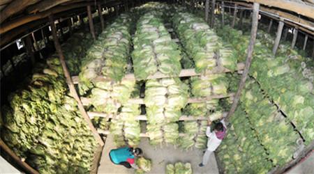 自建冷库储存蔬菜 最高获得政府补贴15万