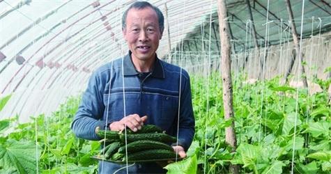 """反季蔬菜成""""摇钱树"""""""