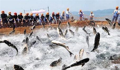 农业部部署汛期渔业生产工作