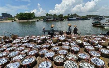 福建清流:渔业产值已达1.6亿元