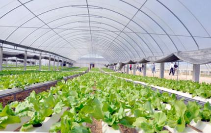 新疆阿合奇县2016年设施农业实现增产增收