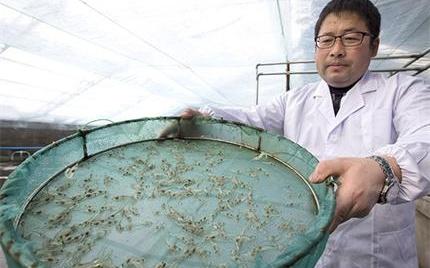 南美白对虾落户新疆巴里坤