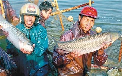 """广东中山市:小鱼助农""""游""""上致富路"""