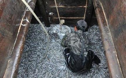 山东青岛渔民渔获丰收 日上岸十几万斤