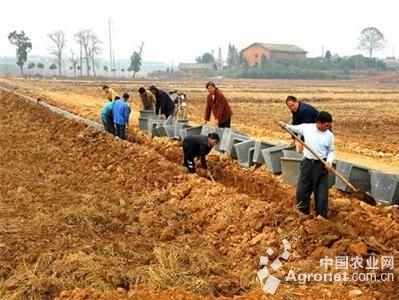 土地托管推进农业现代化进程