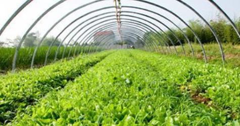 蔬菜绿色防控基地