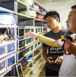 河南新安县上坡村:养蜗牛 共致富
