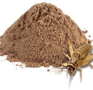 拿蟋蟀做成饼干 我想都没想过!