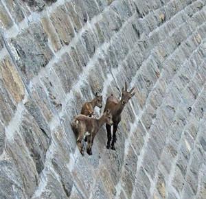行走在悬崖之上的种群